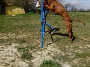 agility-dog-spoleto