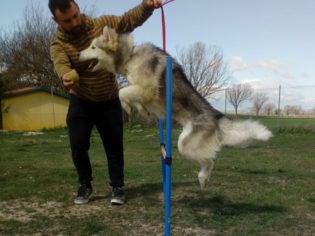 avviamento-all'agility-dog